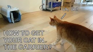 Alvi cat : how to get your cat in the carrier