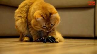 Реакция котов на радиоуправляемую ИГРУШКУ.Паук на радиоуправлении. Обзор ИГРУШЕК.