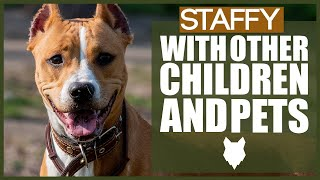 STAFFORDSHIRE BULL TERRIER WITH CHILDREN AND PETS