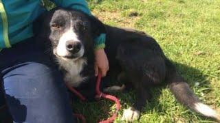 Homesick Dog Journeys 240 Miles Back To Original Owner