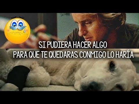 10 MUÊRTÊS De ANIMALES En El Cine, Que Todavía No SUPERAMOS