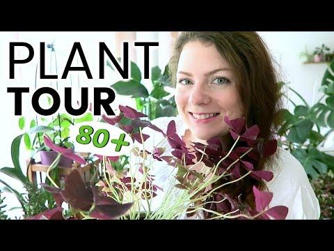 PLANT TOUR 2018 - Ma collection complète de plantes d'intérieur | Plantes vertes et orchidées