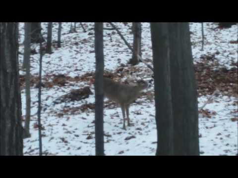 Buck Fight Caught on Camera
