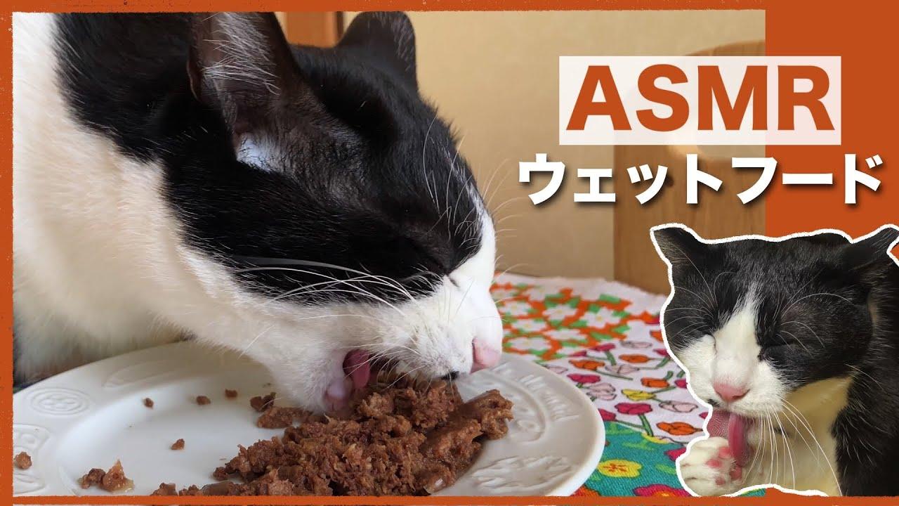 🍙👅ASMR 猫がウェットフードを食べる音&食後のグルーミング【咀嚼音】