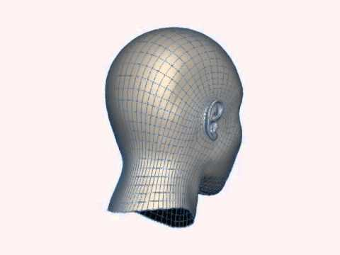 Head Model Wireframe Demo