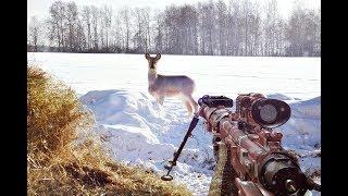 Как охотиться на косулю зимой без собаки? Как приманить косулю зимой?  Часть 1