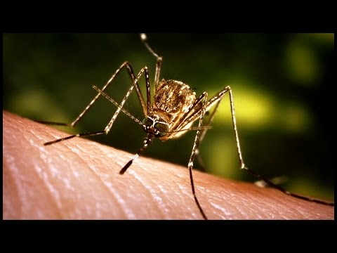 Mosquito Meets MODIS:  South Dakota Fights West Nile Virus