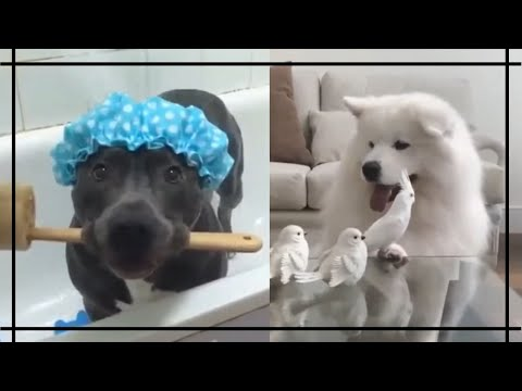 Dog Compilation Home