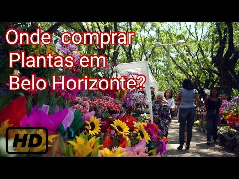 FEIRA DE FLORES em Belo Horizonte -TURISMO e LINDAS PLANTAS - TODA SEXTA-FEIRA