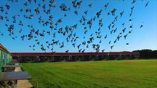 Algarve Pigeons Golden Race 2018 - First training- Monte Francisco