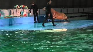 серфинг на дельфинах (дельфинарий Санкт-Петербург)(, 2015-03-18T19:41:23.000Z)