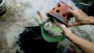 Hướng dẫn thay chậu lan hồ điệp sau tết (repotting phalaenopsis orchids after bloom) thumbnail