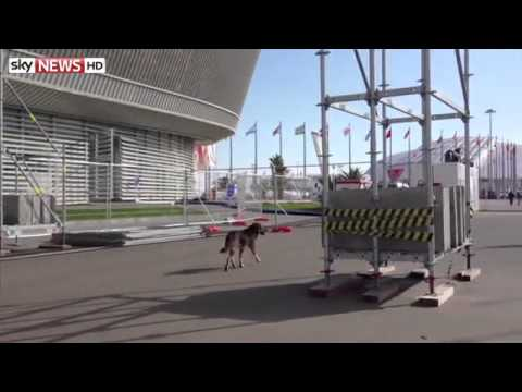 Sochi Orders Stray Dogs Cull Before Olympics