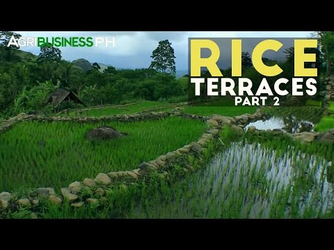 Rice Terraces Part 2 : Construction of Rice Terraces   Agribusiness Philippines