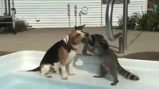 #Смешные животные! Веселая подборка! Засмеешься! Спорим?#