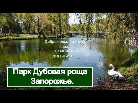 Парк Дубовая роща в Запорожье. Лебеди и лошади в парке.