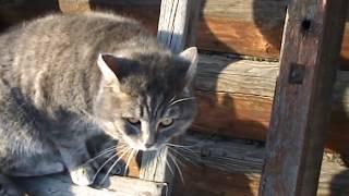 Деревенские коты . Village cats . драка.