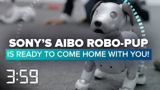 Are you ready to welcome Sony's robot dog, Aibo, home? (The 3:59, Ep. 448)