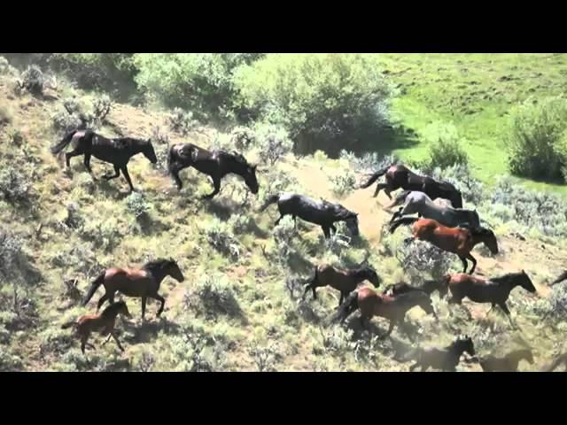Wild Horse Roundup — Challis, Idaho July 2009