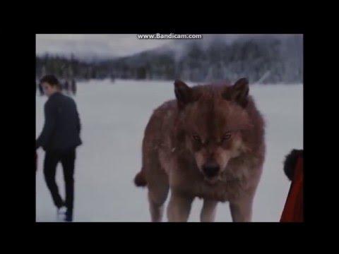 Twilight wolves - Dancing with the devil(breaking benjamin)