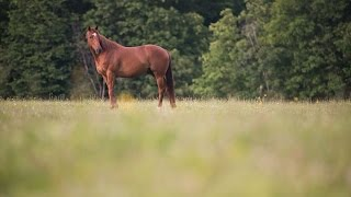 Thoroughbred therapy for veterans