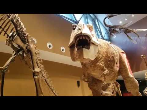 Tour around Natural History Museum! (Shanghai Vlog 6)