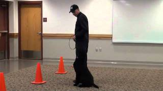 Fizzy (standard Poodle) Boot Camp Dog Training Demonstration