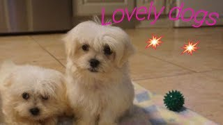 dogs 2018 tv schedule - dog Lovely dogs | fromm dog food