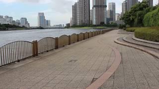 東京都中央区新川1丁目31 近くの隅田川沿い.