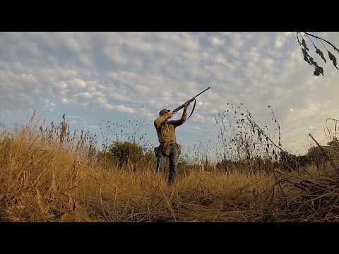 North Texas Dove Hunting 2017