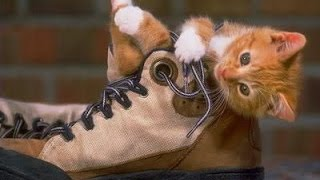 Funny Cats-Funny Cats Compilation-Cats Compilation 2017- FUNNY Cats|Funny Animal|