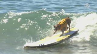 Собаки соревновались в сёрфинге на пляже Калифорнии (новости)