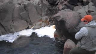 iceland salmon fly fishing on midfjardara river late july