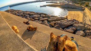防波堤での猫の集会に参加する