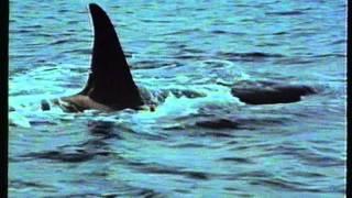 Cousteau - La grande aventure de la mer