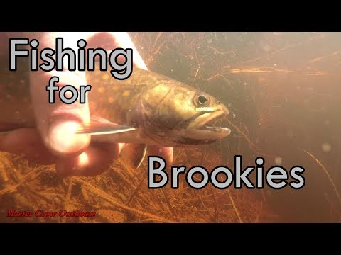 Speckled Trout Fishing New Brunswick Canada-2018