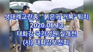 """생태계교란동물 """"붉은귀 거북"""" 퇴치행사. 음악/정동원""""…"""