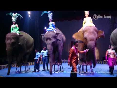 VIDEO Penampakan pada Atraksi Oriental Circus Indonesia Di Kota Semarang