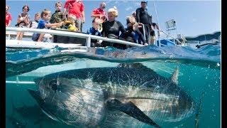 Самый большой тунец в мире стал тихоокеанский голубой тунец весом 411,6 кг