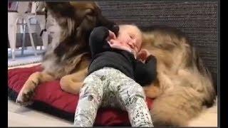 Śmieszne zwierzęta: psy, koty, ptaki, zwierzęta - inteligentne i zabawne