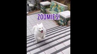 Zoomies!!!