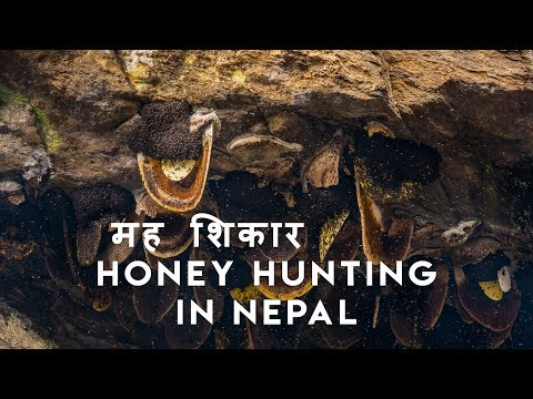 Honey Hunting In Nepal | Scaring Documentary | 2019