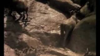 Afryka - Serengeti part 4 of 4