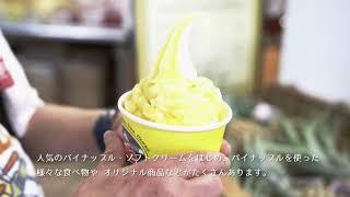【ブルーウェーブツアー】プチトリップ★ノースショアツアー