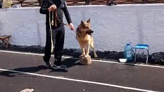 На выставке собак