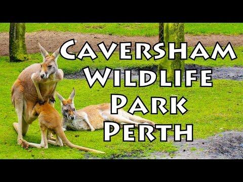 Koopify ✪ Caversham Wildlife Park, Perth, Australia