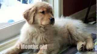 Puppy To Adult Time Lapse