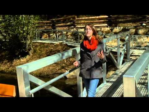 Restocking The Fish At Durrance Lake - Shaw TV Victoria