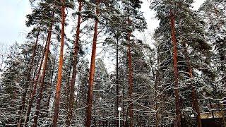 Беловежская пуща 2016
