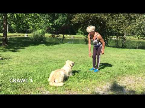 AKC TRICK DOG - NOVICE